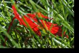 051014 leaf in the grass.jpg