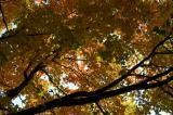 Fall glow