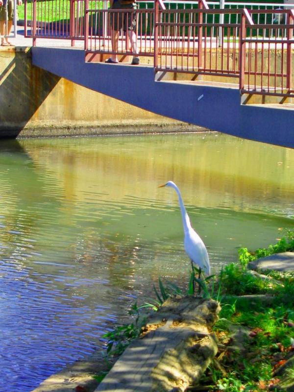 2005-09-22: campus egret