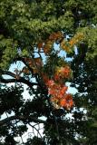 2005-09-11: intimations of autumn