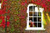 en Couleurs - The Window