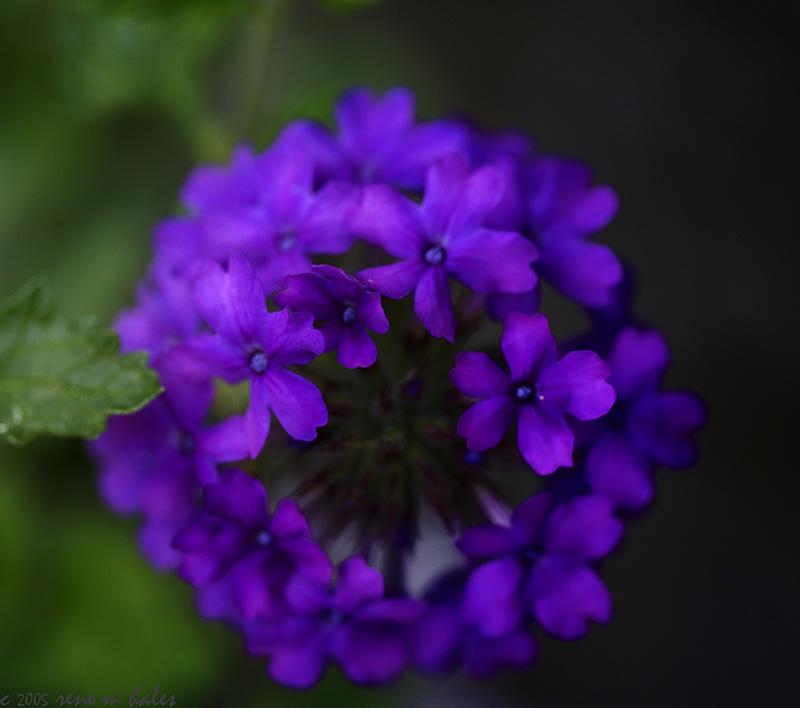 : purple flower :