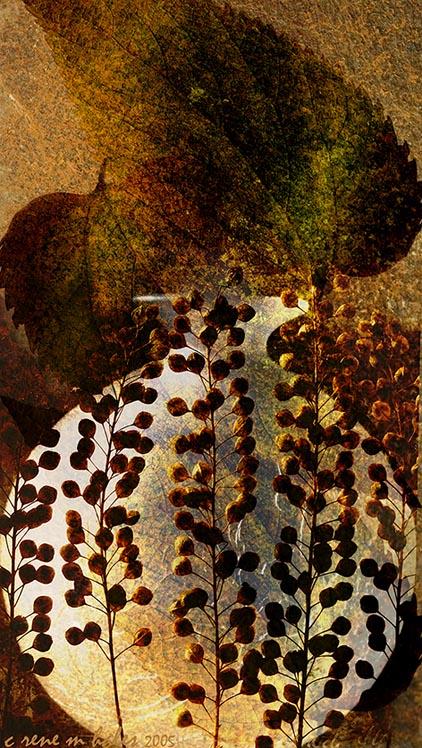 leafy seeds