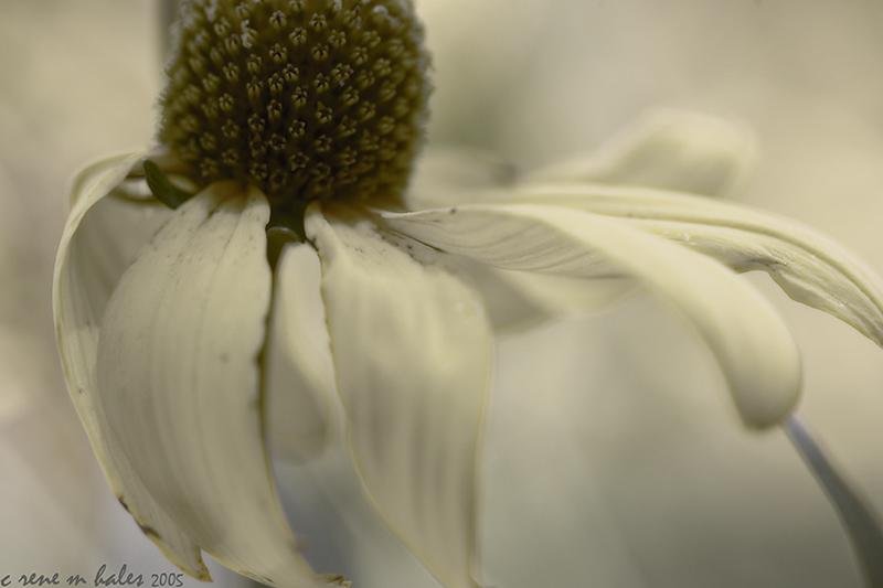 flower dreams ii