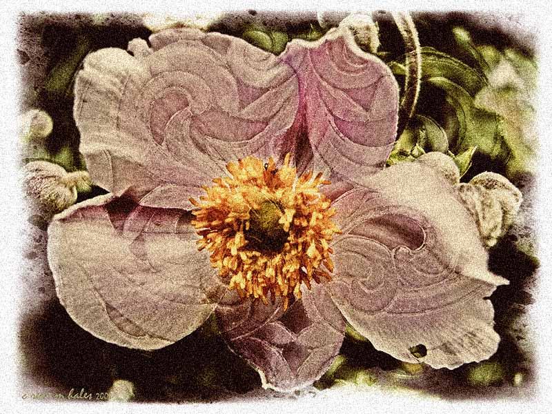 wall flowers iii