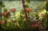 flower dreams vi