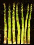 asparagus in a line