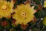 Arizona Summer Flowers
