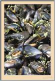 Mussels Speciality
