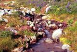 Mountain creek and wildflowers