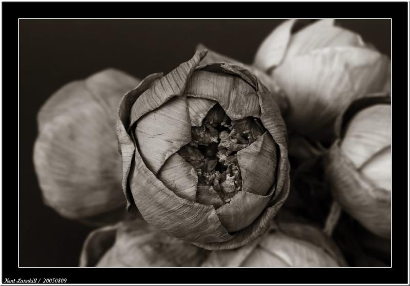 20050809 - Dry Lotus -