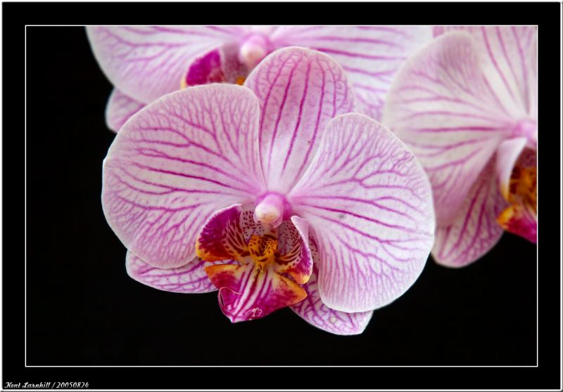 20050824 - Orchid -