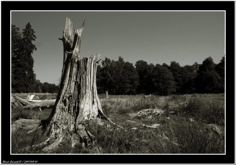 20050830 - Tree -