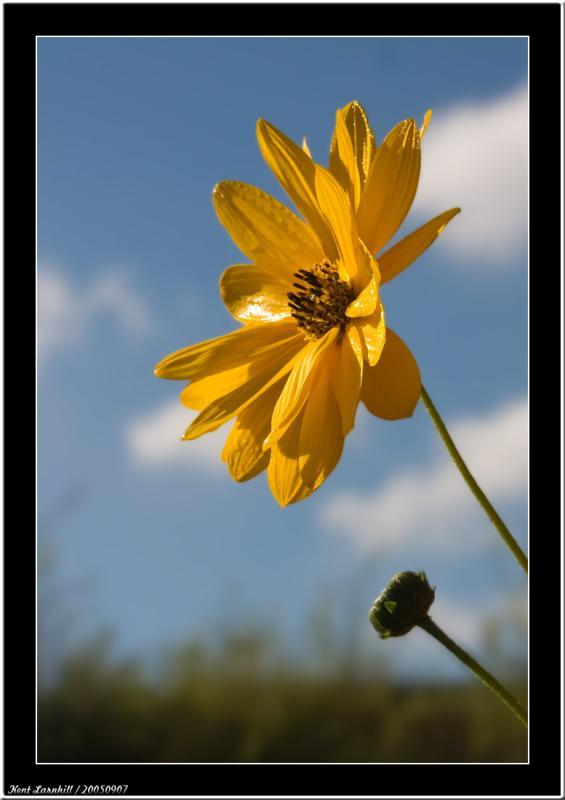 20050907 - It´s yellow -