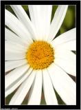 20050701 - Flower -