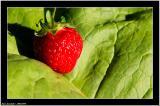 20050709 - Strawberry -