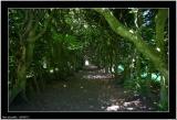 20050712 - Mystic road -