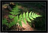 20050719 - In the wood -