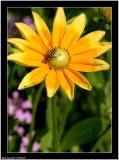 20050729 - Yellow flower -