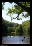 20050901 - Birds in the lake -