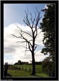 20050903 - Tree -