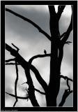 20050906 - Tree and a bird -