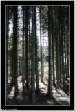 20050910 - Wood -