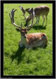 20050916 - Deer -