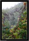 20050917 - Spidernet -