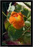 20051006 - Orange -