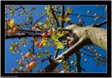 20051011 - Tree  -