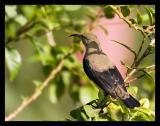 Sunbird Sep 05