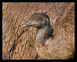 Emu Oct 05