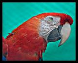 Macaw Oct 05