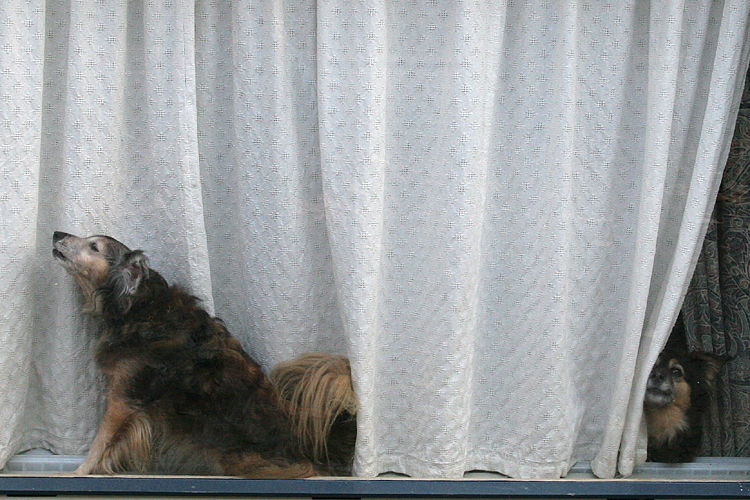 Whos that doggie in the window?