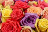 Fake roses050712-001