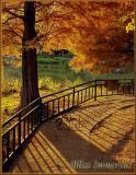 autumn04.jpg