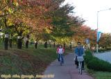 Biking is the best way to enjoy the scenic beauty of  Gyeongju.