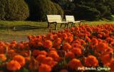 Simply inviting...! : Park Benches near Bomun Lake