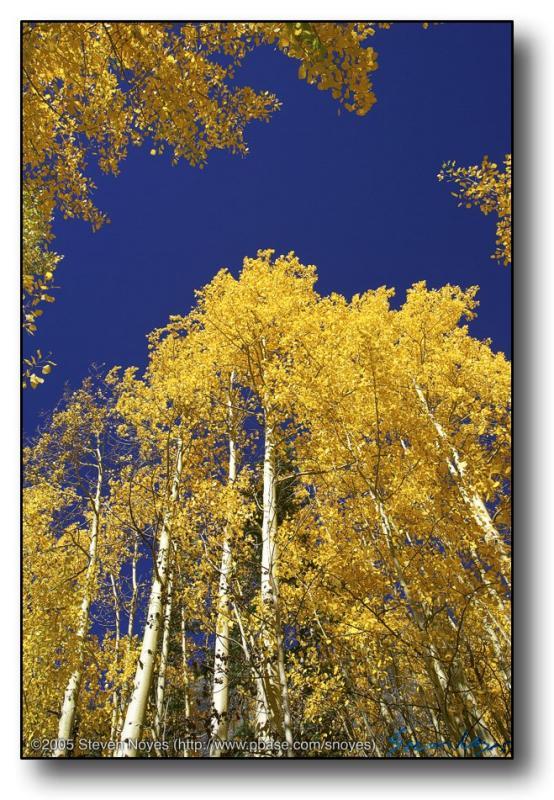 Colorado : Ophir Canyon : Cliche