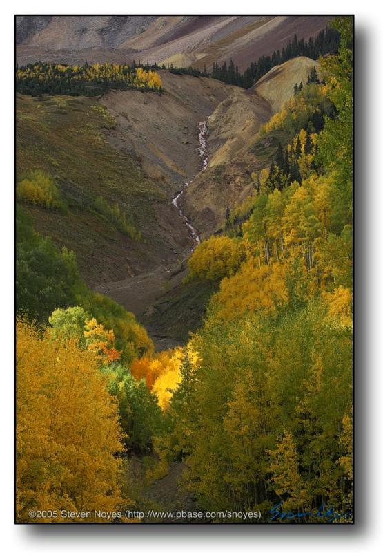 Colorado : Ophir Canyon : Looking Up Chapman Gulch