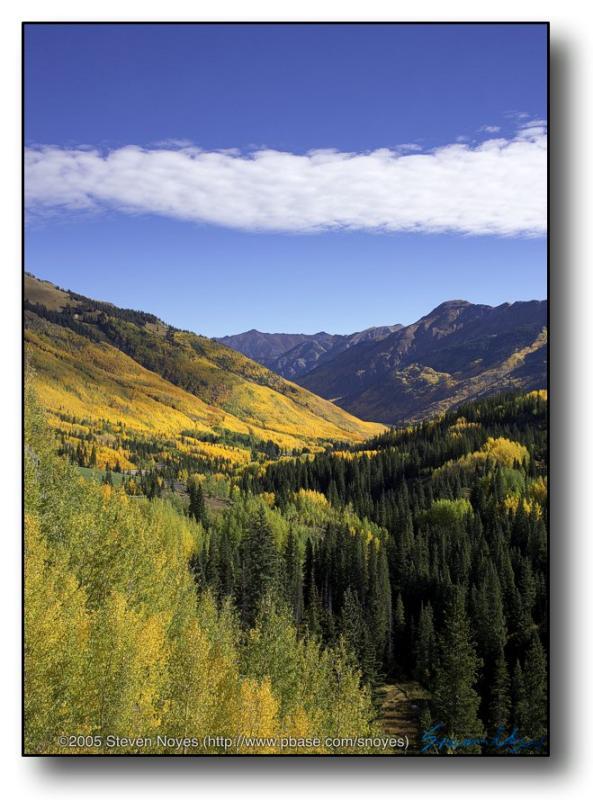 Colorado : Ouray : Aspen