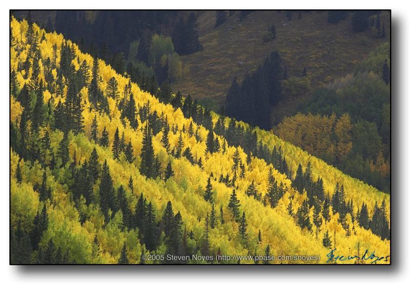 Colorado : Ophir Canyon : Vivid Hill