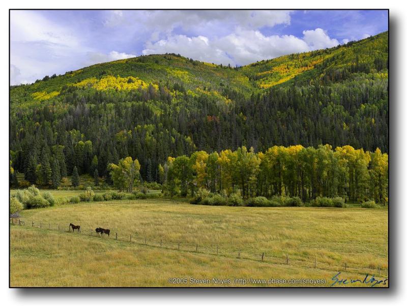 Colorado : Dolores Canyon : Horse and Aspen