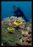 Susie and some Anemone Fish