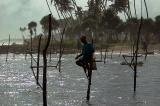 Stilt fishermen, Weligama Bay