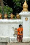 Budding monk.........?