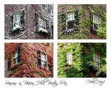 Seasons in Beacon Hill
