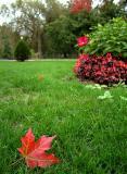 Autumn, Public Garden II