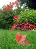 Autumn, Public Garden